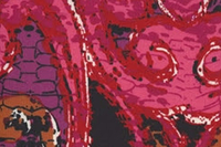 Image Red Pink Swirl